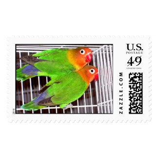 fisher LoveBirds Stamp