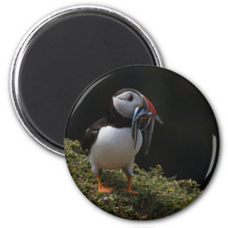 Fisher Puffin Magnet