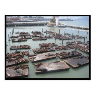 fisherman's wharf seals postcard