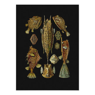 Fishes in Golden Browns Card