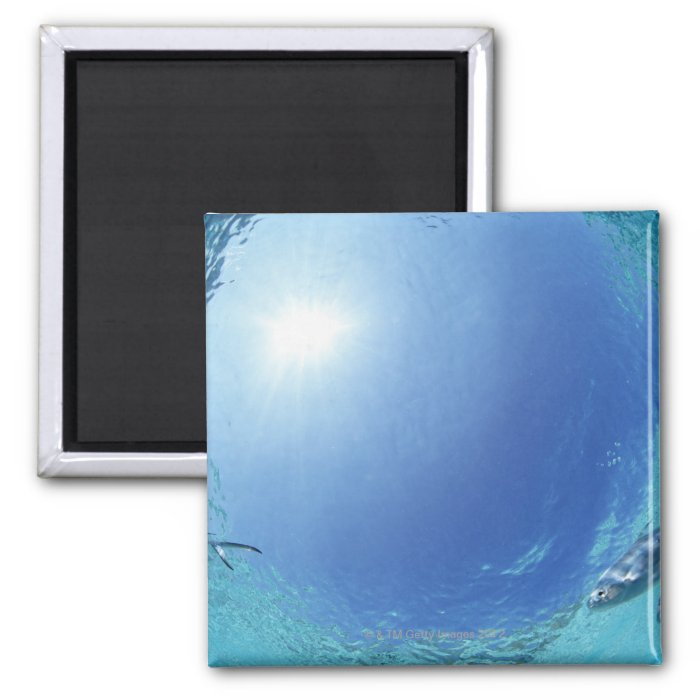Fishes in the sea 2 inch square magnet