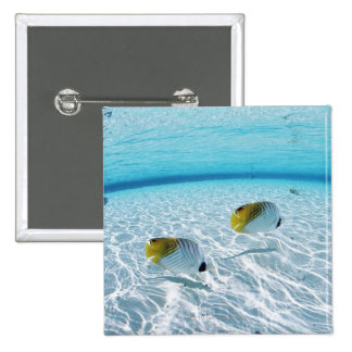 Fishes in the sea 2 pinback button