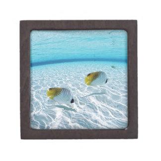 Fishes in the sea 2 premium jewelry box