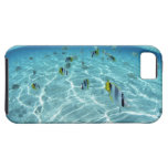 Fishes in the sea 3 iPhone SE/5/5s case