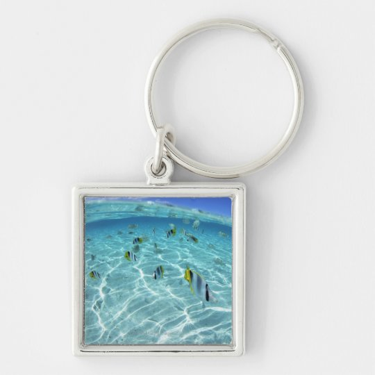 Fishes in the sea 3 keychain