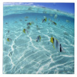 Fishes in the sea 3 large square tile