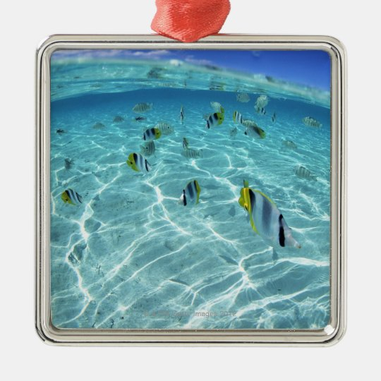 Fishes in the sea 3 metal ornament
