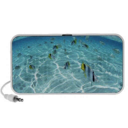 Fishes in the sea 3 mini speaker