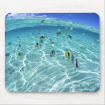 Fishes in the sea 3 mouse pad