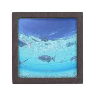 Fishes in the sea 4 premium gift box