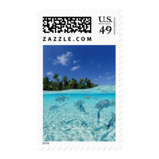 Fishes in the sea postage stamp