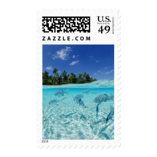 Fishes in the sea stamp