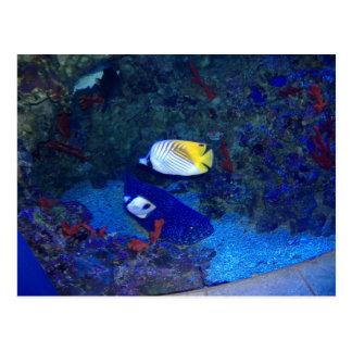 Fishes of Hawaii Postcard