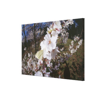 Fisheye view of Butterfly on flower Canvas Print