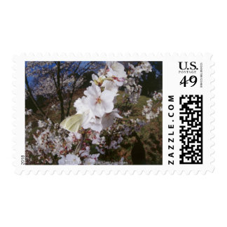 Fisheye view of Butterfly on flower Postage Stamp
