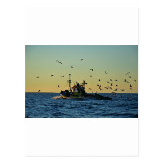 Fishing Boat Mobbed By Gulls Post Cards