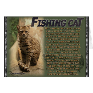 Fishing Cat Cincinatti Zoo Card