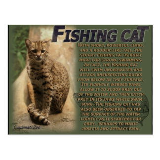 Fishing Cat Cincinatti Zoo Postcard
