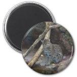 fishing cat magnet