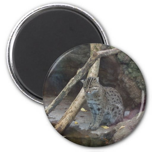 Fishing cat magnet zazzle for Fishing magnets for sale