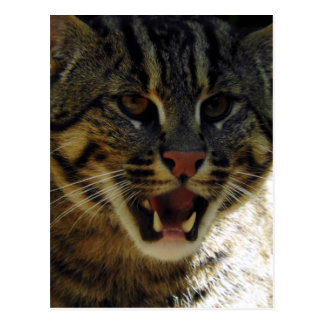 Fishing Cat Postcard