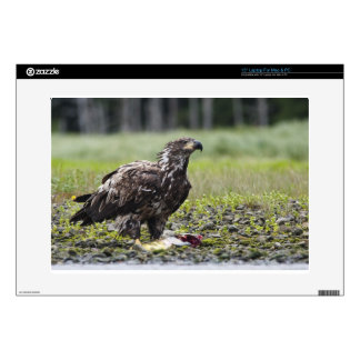 Fishing eagle decal for laptop