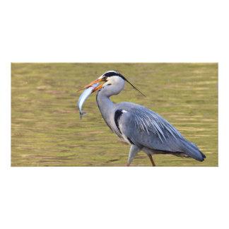 Fishing Grey Heron Photo Card