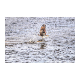 Fishing Osprey & Catch 3 HDR Wildlife Photo Canvas Print