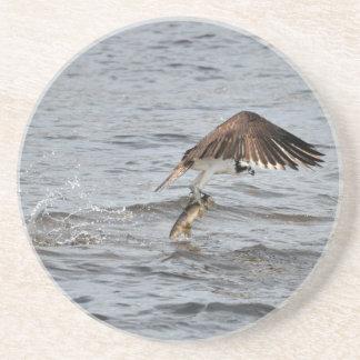 Fishing Osprey & Catch 3 Wildlife Photo Coaster