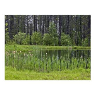 Fishing pond postcard