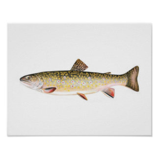 Fishing poster - Brook Trout Female Fish