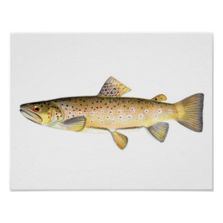 Fishing poster - Brown Trout Fish