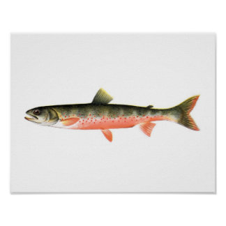 Fishing poster - Canadian Red Trout Female Fish