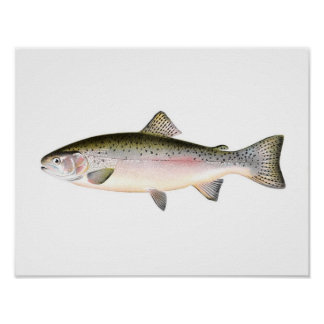 Fishing poster - Rainbow Trout Fish