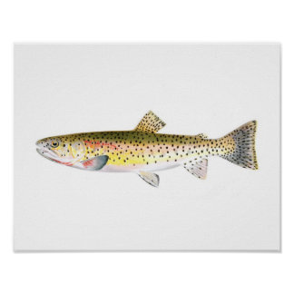 Fishing poster - Rocky Mountain Trout Fish