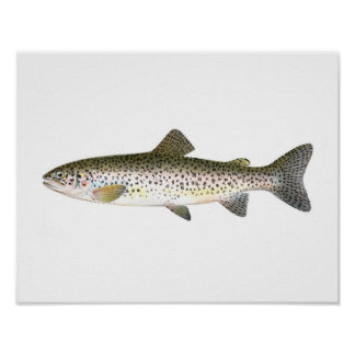 Fishing poster - Salmon Trout Fish