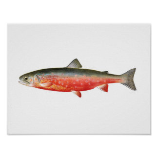 Fishing poster - Sunapee Trout Fish