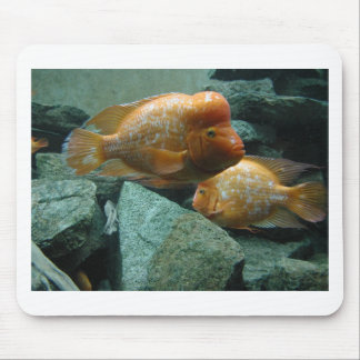 Fishy Face Only Momma Fish Would Love Mouse Pad