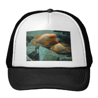 Fishy Face Only Momma Fish Would Love Trucker Hat