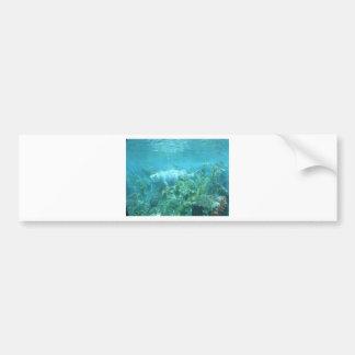 Fishy fishy... bumper sticker
