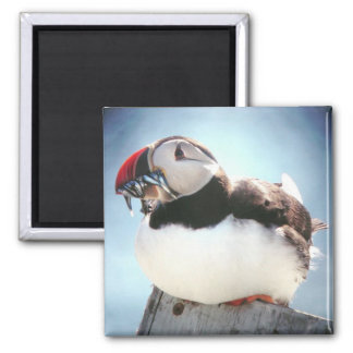 Fishy Puffin Square Magnet