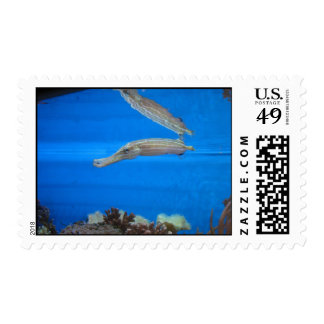 Fishy Reflections Postage Stamp