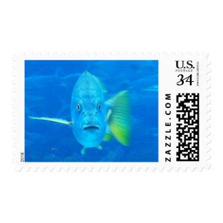 Fishy stamp
