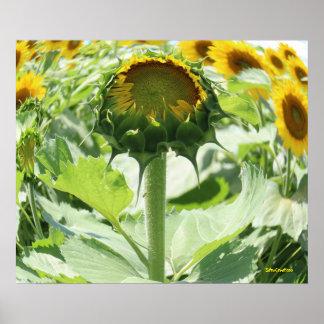 Fishy Sunflower Poster