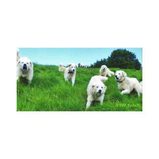 Five Angry Italian Sheepdogs, Wrapped Canvas Print