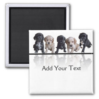 Five Black and Tan Cocker Spaniel Puppies Magnet