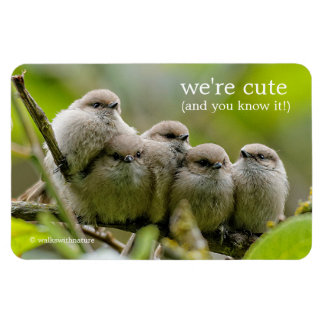 Five Bushtits Huddling in the Cold and Rain Magnet