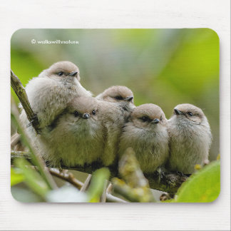 Five Bushtits Huddling in the Cold and Rain Mouse Pad