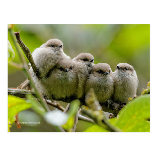 Five Bushtits Huddling in the Cold and Rain Postcard