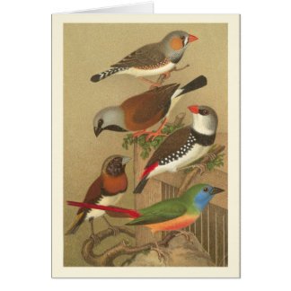 Five Colorful Pet Birds Perched on a Branch Greeting Card